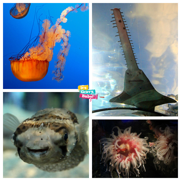 Ripley's Aquarium of the Smokies Family Review