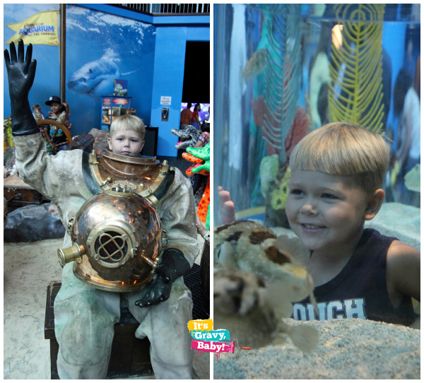 Ripley's Aquarium of the Smokies Hand-On