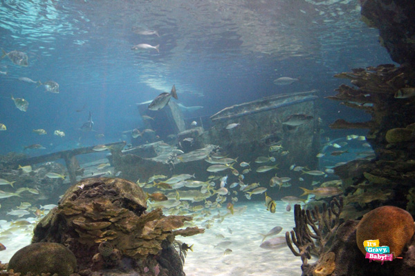 Ripley's Aquarium of the Smokies Sunken Ship