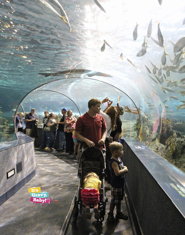Ripley's Aquarium of the Smokies Tunnel